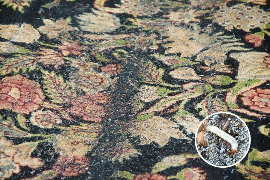 Preventing Moth Damage to Your Rug