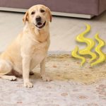 Why Your Rug Smells Like Pet Odor