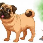 How to Remove Pet Feces from your Rug