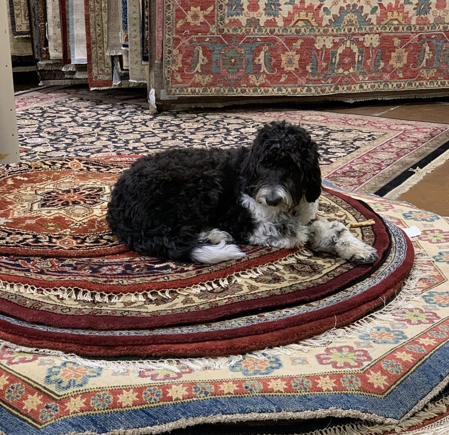 Now I'm a Dog on a Rug!