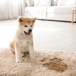Your Rug Smells like Dog Pee? Here's What You Can Do!