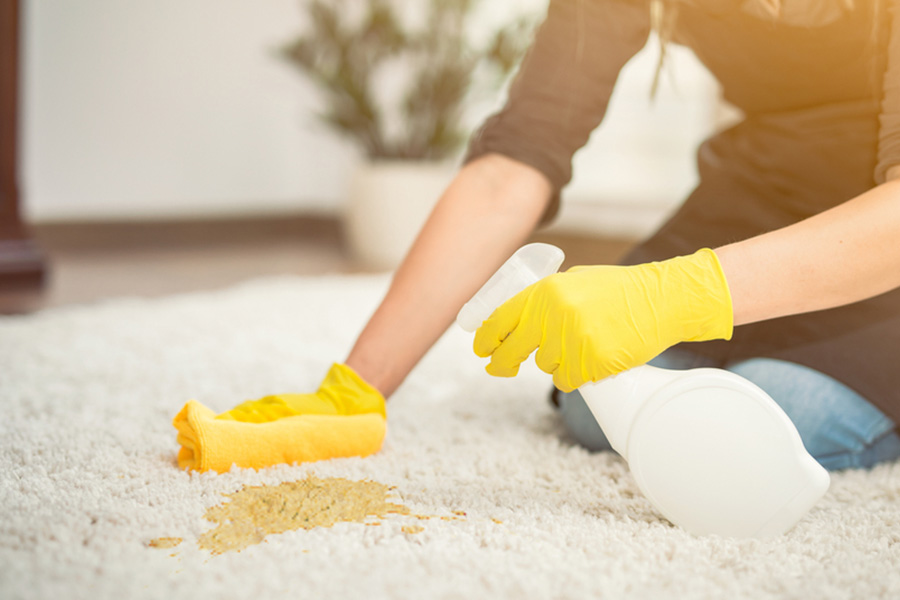removing dog pee smell from rug