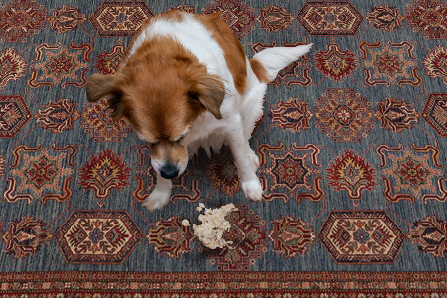 cleaning dog urine from rug