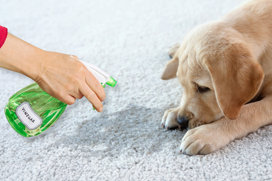 best rug cleaner for pets
