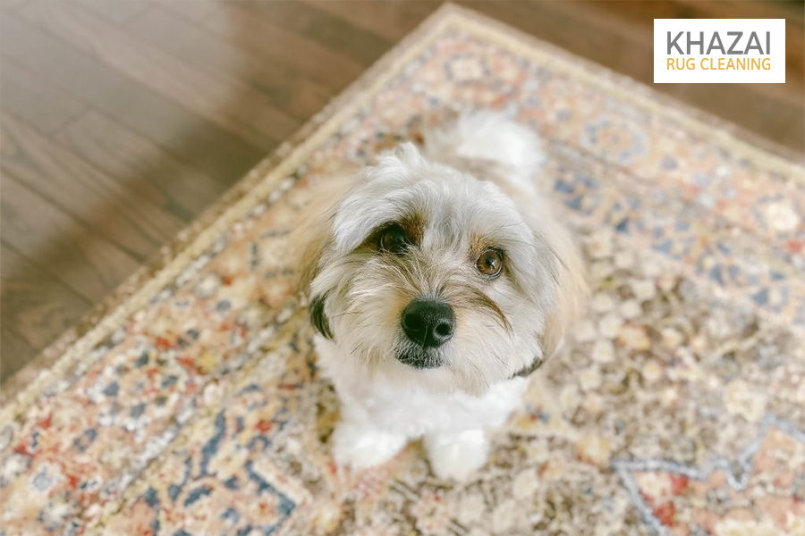 clean dog pee out of rug
