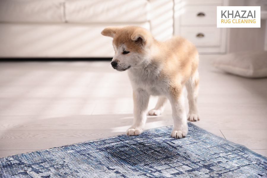 cleaning dog pee from rug