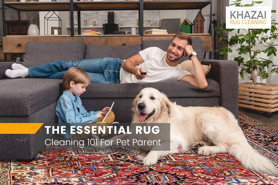 All-In-One Guide To Pet Stains and Odor Removal
